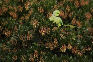 Algunas especies pueden imitar gran diversidad de sonidos, incluida la voz humana Foto:Getty Images. Imagen Por: