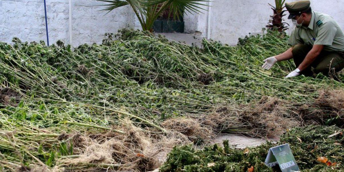 Justicia declara inocente a carabinero dado de baja por consumo de marihuana