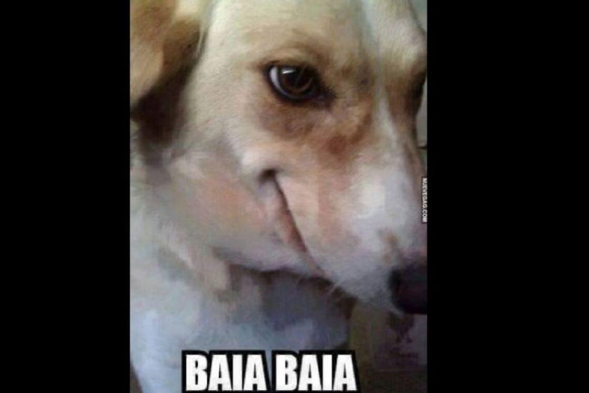 En perros. Foto:vía Twitter. Imagen Por: