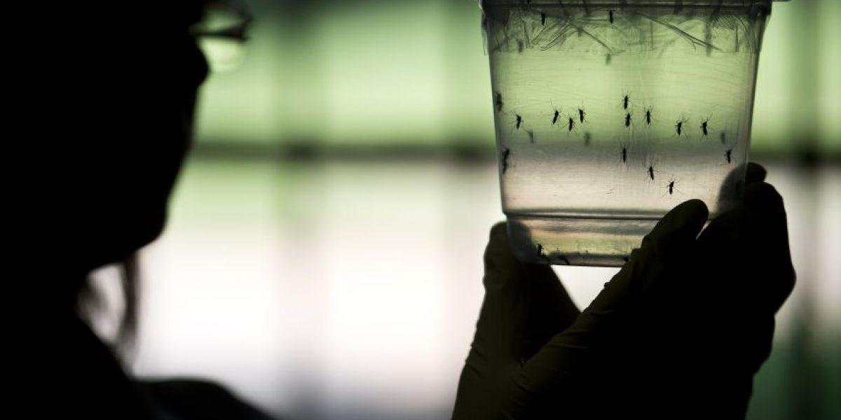 Científicos confirman relación entre virus Zika y microcefalia en fetos