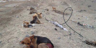 Caso de maltrato animal en Antofagasta: perros fueron quemados con agua hirviendo