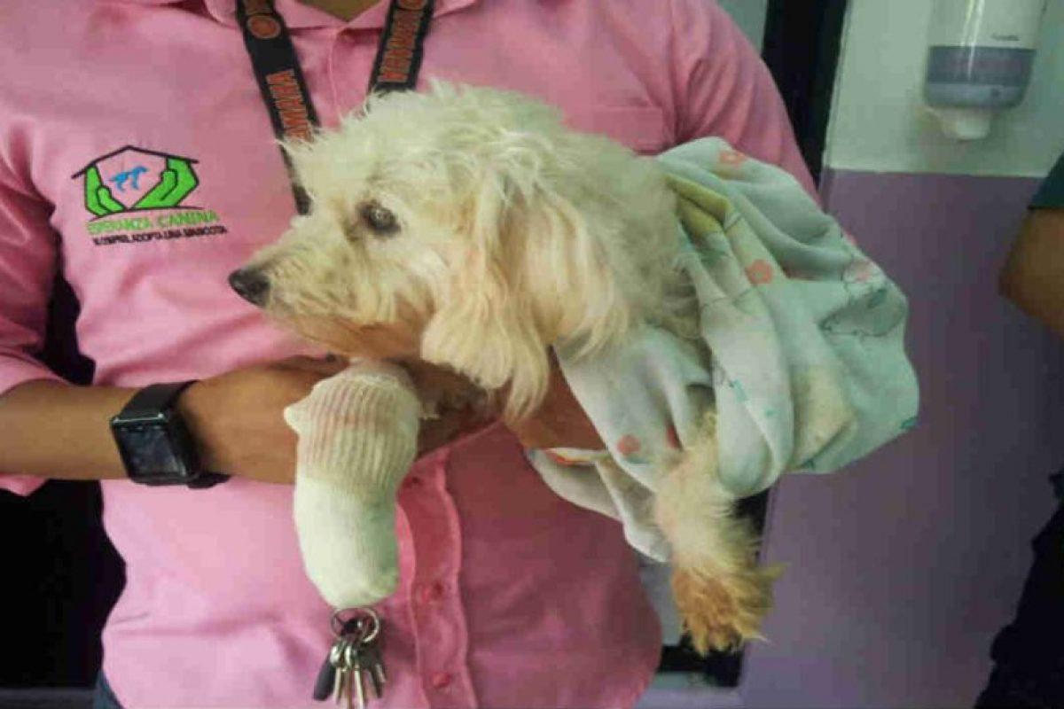 Son cientos de perros y gatos que han sido ayudados por esta asosiación. Foto:Facebook. Imagen Por: