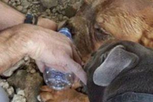 A este perro, por viejo, lo enterraron vivo. Foto:vía Facebook. Imagen Por: