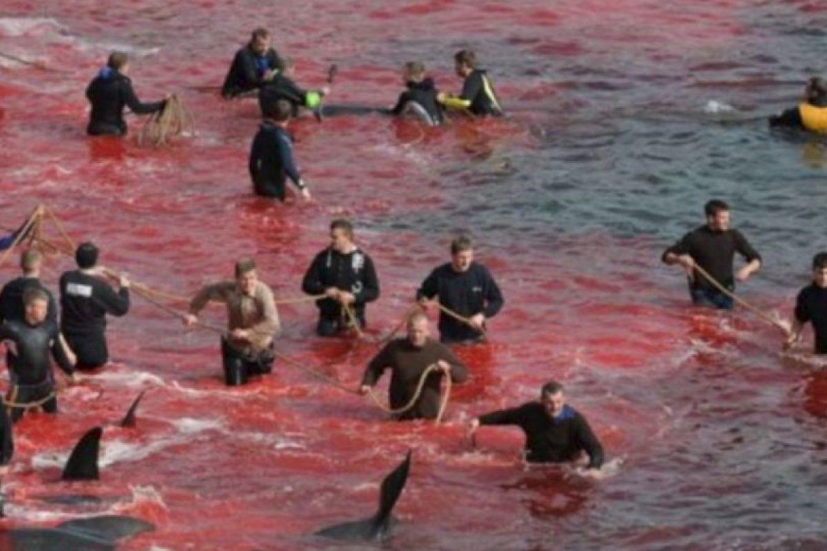 Atrapan ballenas para apuñalarlas en la costa. Participan niños. Foto:vía Sea Shepherds. Imagen Por:
