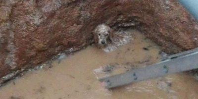 Bomberos de Cartagena realizan heróico rescate de perrito atrapado por las lluvias
