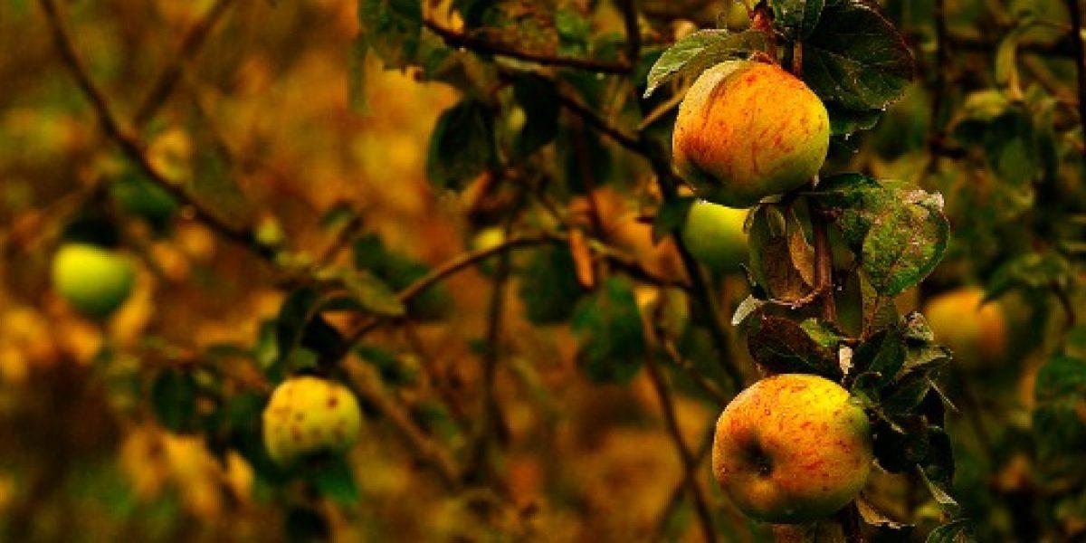 Exportadores de frutas evalúan posibles daños tras sistema frontal