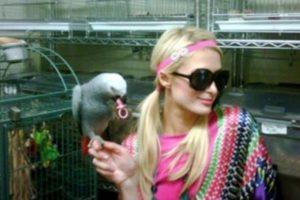 Paris Hilton tiene tantos animales que les creó una casa especial dentro de una de sus residencias en Estados Unidos. Foto:Vía Instagram. Imagen Por: