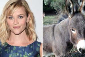 Reese Witherspoon tiene dos bullos, dos cerdos, gallinas, tres perros, cabras y un pony. Foto:Vía Instagram. Imagen Por: