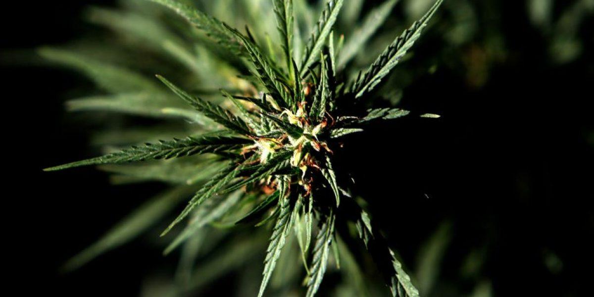 En el Día Mundial del Cannabis, Fundación Daya lanza campaña de socios