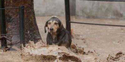 Temporal y el efecto sobre las mascotas: ¿Qué precauciones hay que tener?