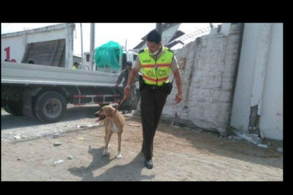 Durante sus esfuerzos no solo ayudan a las personas. Foto:facebook.com/policia.ecuador. Imagen Por: