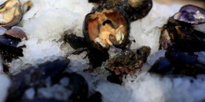 Marea Roja: Salud confirma 9 personas intoxicadas en el país