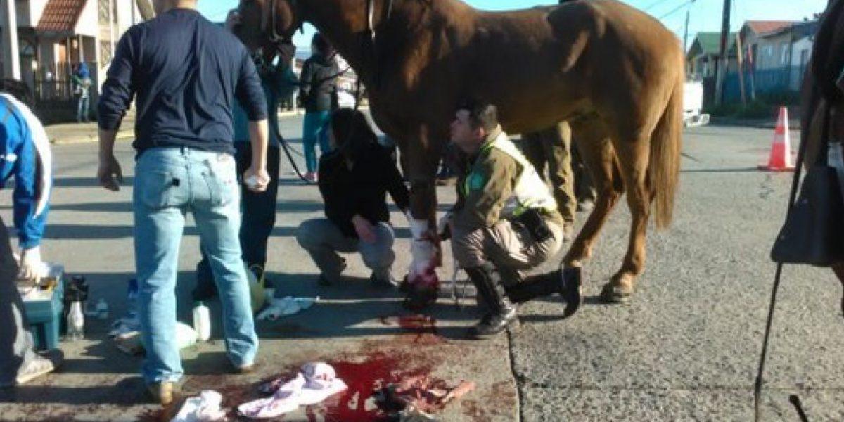 Sujeto atropelló a carabinero y su caballo cuando eludía control policial en Punta Arenas