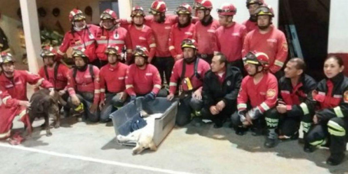 Animales: Dayko, el perro rescatista que falleció en Ecuador