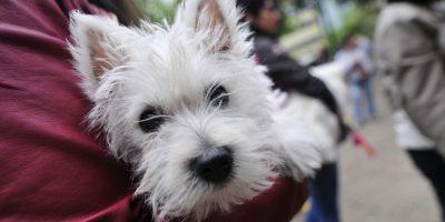 Colegio Médico Veterinario advierte por efectos de las lluvias en las mascotas