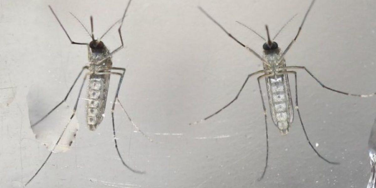 El ISP descartó contagios por virus Zika en Arica