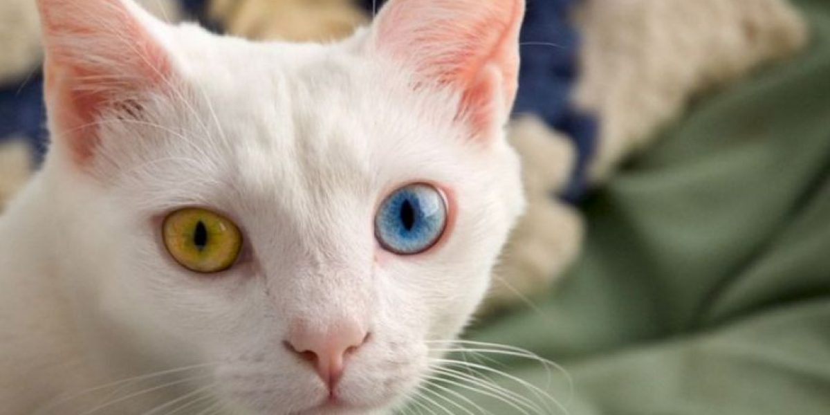 Imperdible: 8 increíbles razones por las que los gatos podrían ser alienígenas