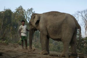 Elefantes Foto:Getty Images. Imagen Por: