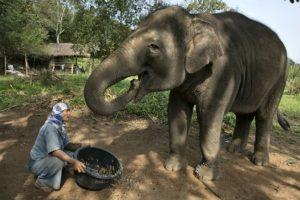 Los elefantes son los animales terrestres más grandes del mundo. Foto:Getty Images. Imagen Por: