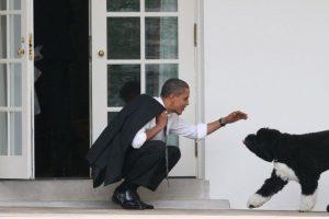 7. ¿Podrán ser un adoptante responsable? Foto:Getty Images. Imagen Por:
