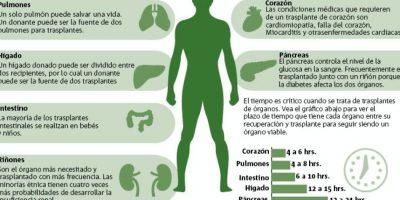 Donación de órganos: cuáles se pueden donar, cómo y bajo qué condiciones