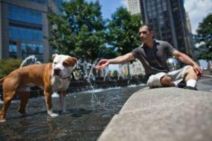 Originalmente fue creado para ser un perro de pelea. Foto:Getty Images. Imagen Por: