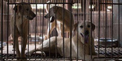 La carne de perro cada vez menos popular en Corea del Sur