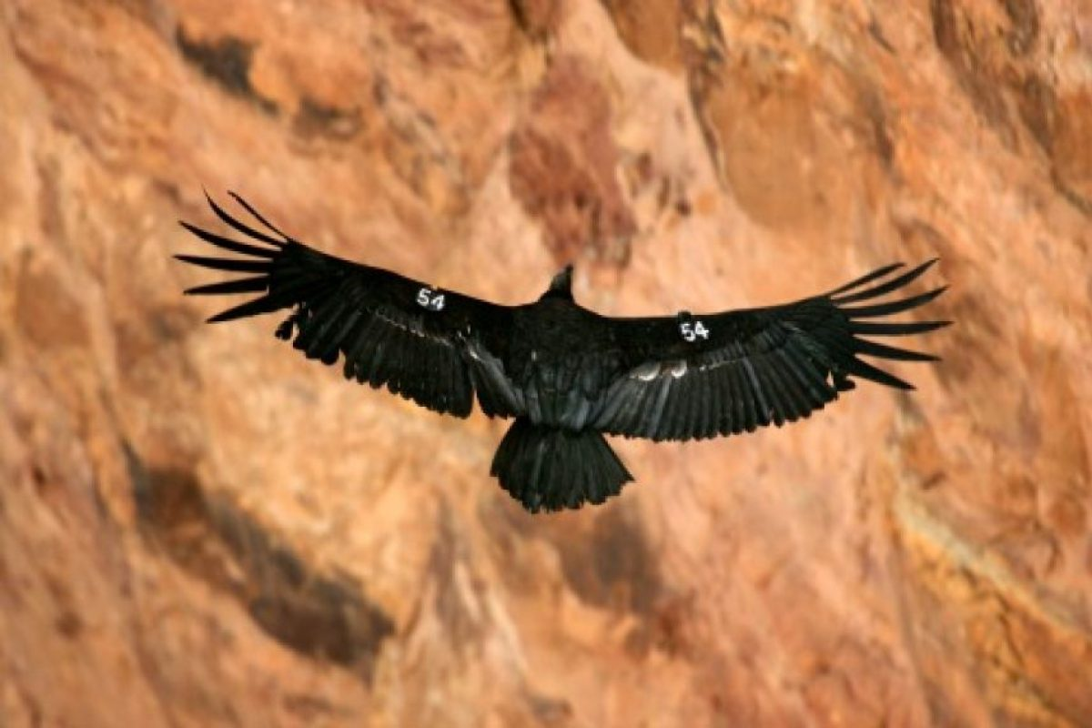 Está ubicado en en el norte de Arizona, Estados Unidos. Foto:Getty Images. Imagen Por: