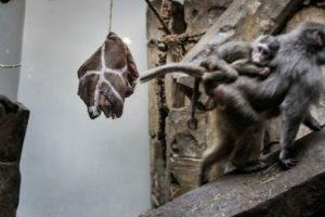 Poco después en el mismo año el Zoológico Jyllands Park, al oeste de Dinamarca, advirtió que tomaría la misma medida. Foto:AFP. Imagen Por: