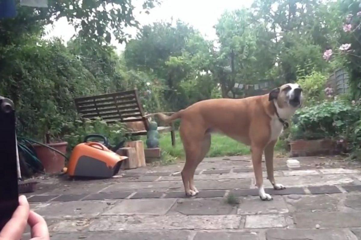 Los siguientes perros disfrazados seguramente les robarán el corazón. Foto:Vía Youtube/Ollie Hall. Imagen Por: