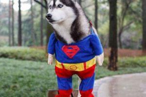 Super-perro Foto:Imgur. Imagen Por: