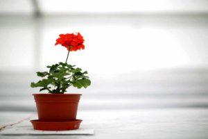 La fotosíntesis es el proceso por el cual las plantas fabrican su propio alimento. Foto:Getty Images. Imagen Por: