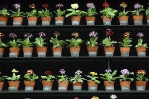 Para llevar a cabo este proceso, las plantas necesitan clorofila, que es la misma sustancia que las vuelve verdes. Foto:Getty Images. Imagen Por: