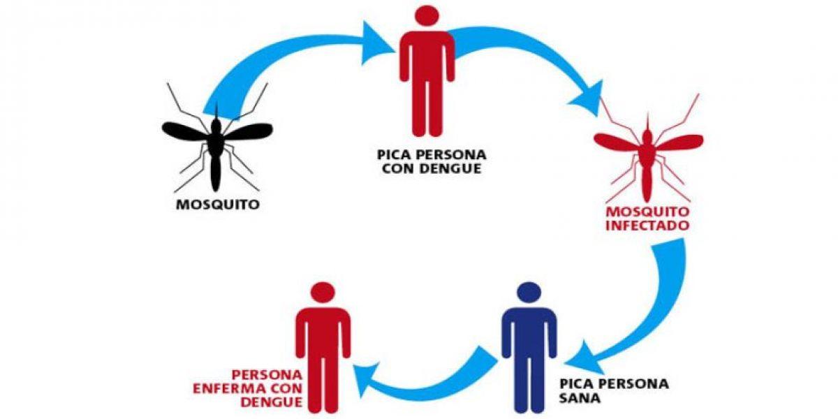 Alerta Sanitaria en Arica: ¿Qué debo saber sobre el mosquito 'Aedes Aegypti'?