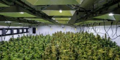 El paraíso de la marihuana está al lado de la Casa Blanca