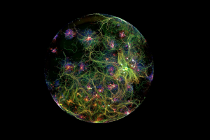 "Otro ""universo neuronal"" creado en laboratorio, a través del microscopio. Foto: Court Lab/Neurounion Medical Foundation. Imagen Por:"