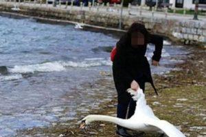 Una mujer búlgara provocar la muerte de un cisne solo para poder tener un autorretrato. Foto:Vía Twitter. Imagen Por: