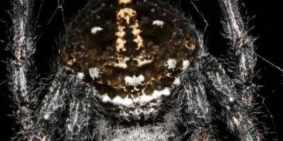 Descubren los extraños y terroríficos actos sexuales de las arañas