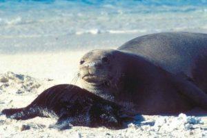 Son cuidadosamente monitoreados por la NOAA Foto:commons.wikimedia.org. Imagen Por: