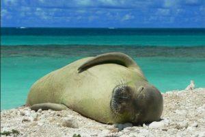 Es uno de los mamíferos marinos más raros del mundo. Foto:commons.wikimedia.org. Imagen Por: