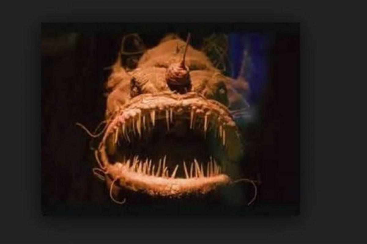En el lugar habitan distintas especies desconocidas. Foto:Youtube.com. Imagen Por: