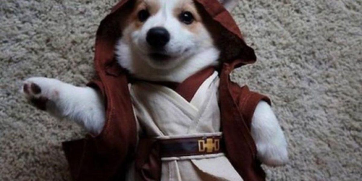 ¡La fuerza los acompaña! Hasta los perros se sumaron al día de Star Wars