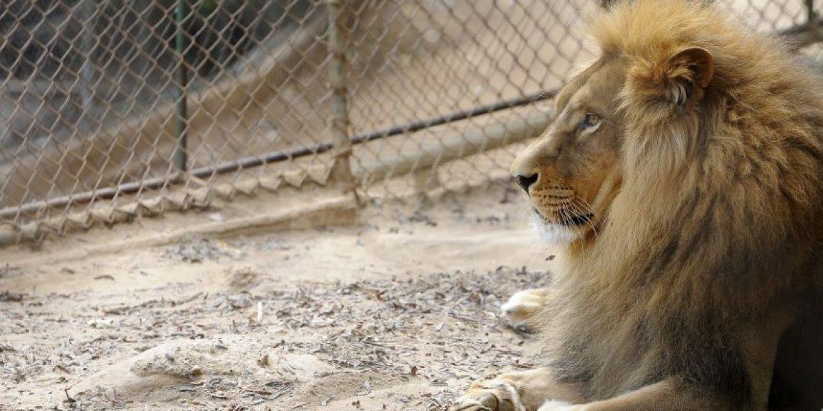 Animalistas critican nuevo reglamento de circos y exigen prohibir el uso de animales