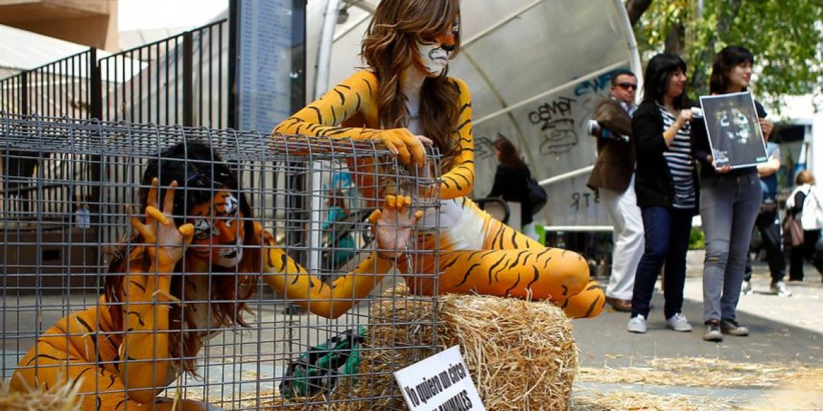 Gobierno anuncia proyecto de ley que prohibirá el uso de animales en circos