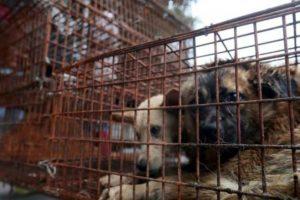 1. Festival de carne de perro Foto:vía AFP. Imagen Por: