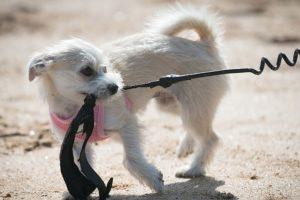 Este año se pensó en matar a aproximadamente 10 mil perros y luego comerlos. Foto:vía AFP. Imagen Por: