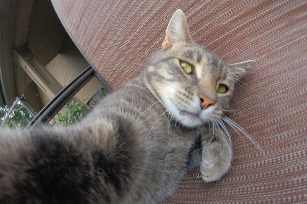 """Esta gato llamado Many es un """"amante"""" de los selfies, mismos que comparte en Instagram. Foto:instagram.com/yoremahm. Imagen Por:"""