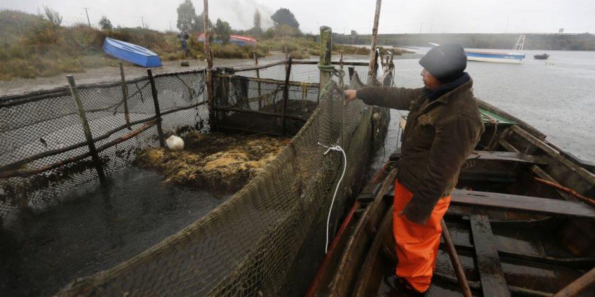 Afectados por marea roja: Gobierno no toma el peso