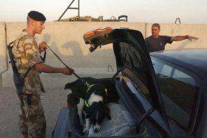 Son utilizados como compañeros de los policías o militares en sus labores Foto:Getty Images. Imagen Por: