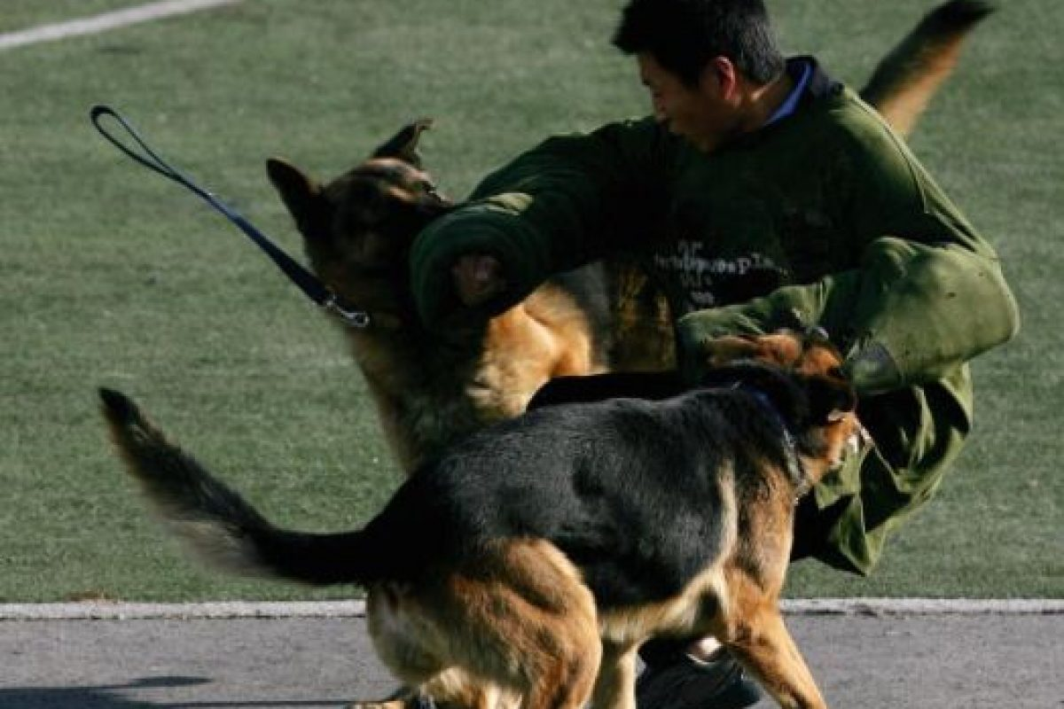 Perros de salvamento (derrumbes de edificios, socorristas) Foto:Getty Images. Imagen Por: